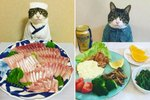 Adorable Cat Chef Is Our Nom-Nom-Nominee For Cook Of The Year