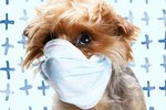 How to Clear a Dog's Stuffy Nose