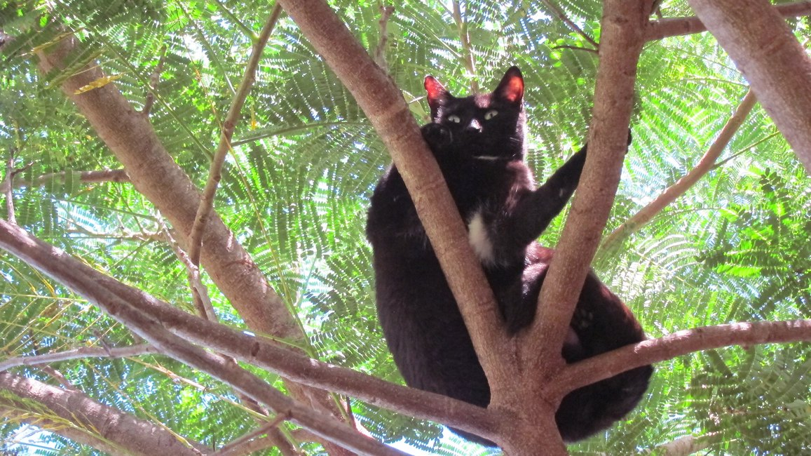 Hawaiian Sanctuary Is Heaven On Earth For Cat Lovers