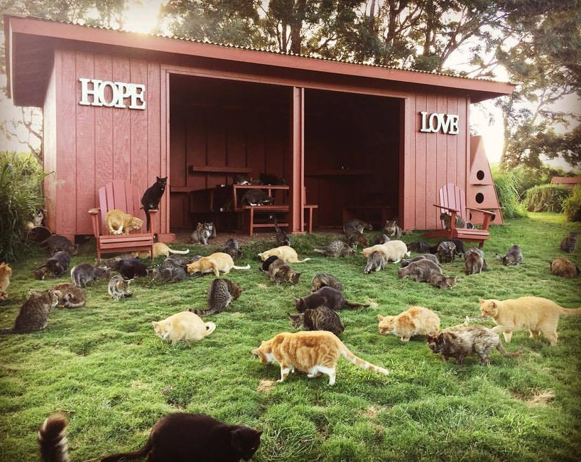 Hawaiian cat sanctuary is new travel goals for 2018